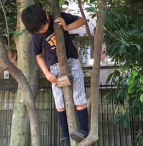 木登り息子